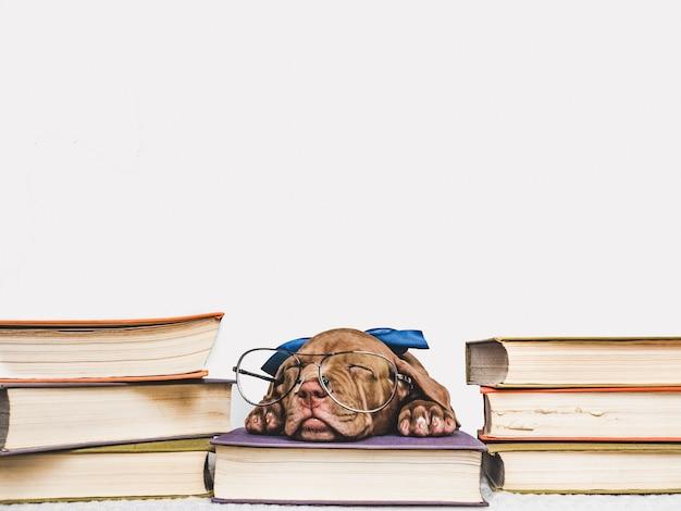 Ładny szczeniak śpi i zabytkowe książki