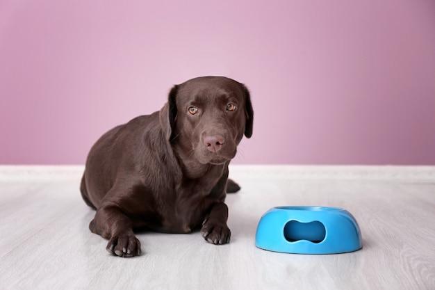 Ładny zabawny pies w pobliżu pustej miski przed kolorową ścianą