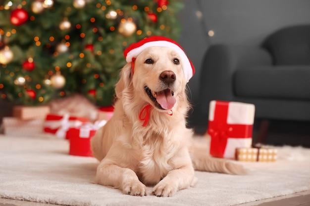 Ładny zabawny pies w santa hat w domu w wigilię bożego narodzenia