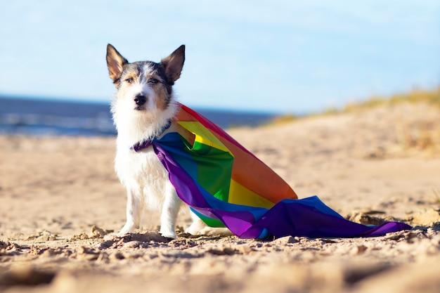 Ładny zabawny pies z kolorową tęczową flagą lgbt gejów. koncepcja wakacje dumy. styl życia na świeżym powietrzu