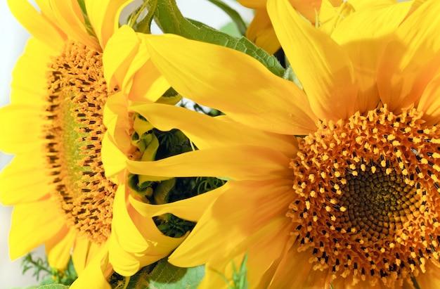 Ładny żółty fragment bukietu słonecznika lato. kompozytowe zdjęcie makro ze znaczną głębią ostrości.