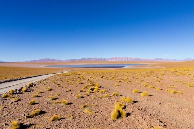 Laguna kollpa kkota w boliwii