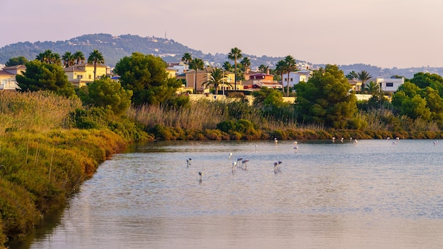 Laguna z flamingami obok wakacyjnego kompleksu w calpe alicante.