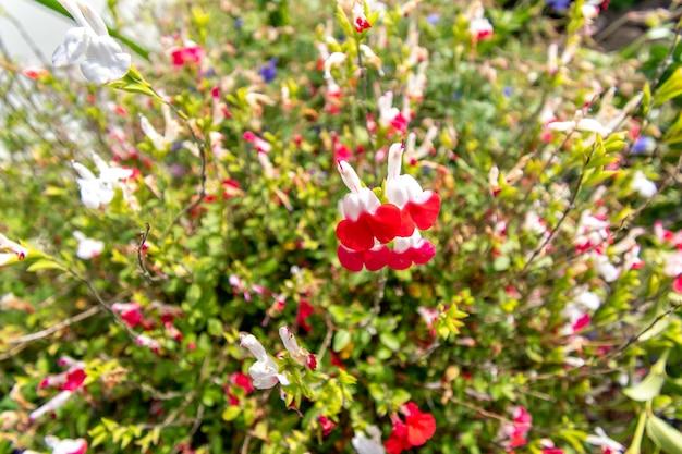 Łąka kwiatowa z różnymi rodzajami kwiatów na backgrond.