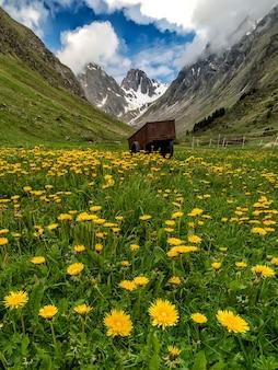 Łąka z dużą ilością kwiatów i wózkiem z górami
