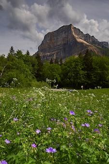 Łąka z kwiatami i kwiatami z górami w alpach
