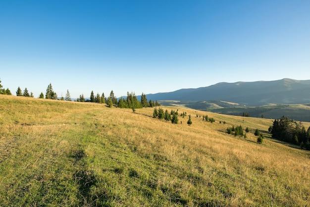 Łąka z suchą trawą, górą i niebieskim niebem