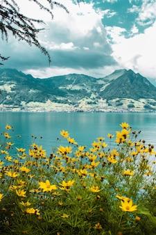 Łąka z żółtymi kwiatami na tle jeziora czterech kantonów i szwajcarskich gór z polami
