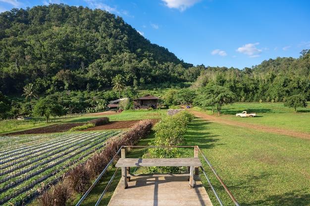 Łąki i pola truskawek w ogrodzie z widokiem na góry. życie na obszarach wiejskich północnej tajlandii.