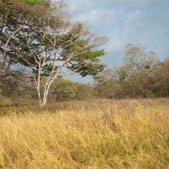 Łąki w kostaryce