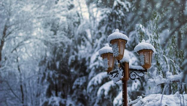Lampa za kilkoma drzewami pokrytymi śniegiem zimą