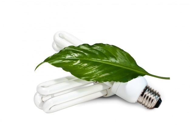 Lampy fluorescencyjne i zielony liść na białym tle