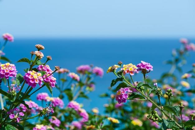 Lantana kwiaty na tle błękitnego morza, pocztówka, tło dla broszury turystycznej