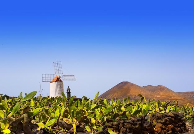 Lanzarote guatiza kaktusowy wiatrak ogrodowy