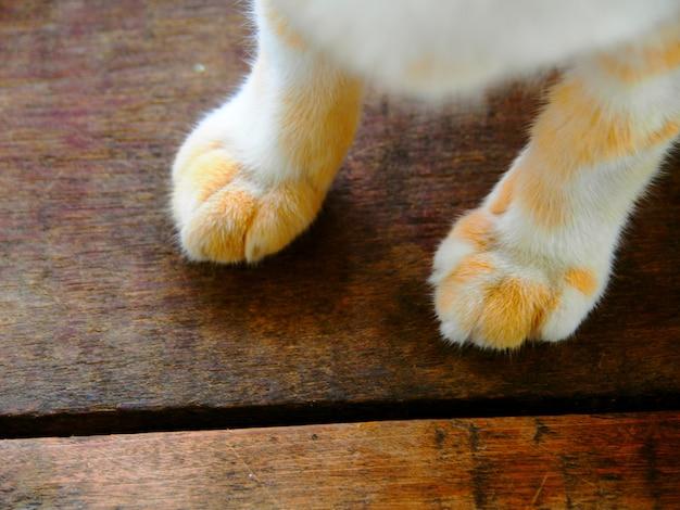 Łapa kota na drewnianym, zbliżenie łapa kota na drewnianym tle. stopa kota, łapa kota vintage