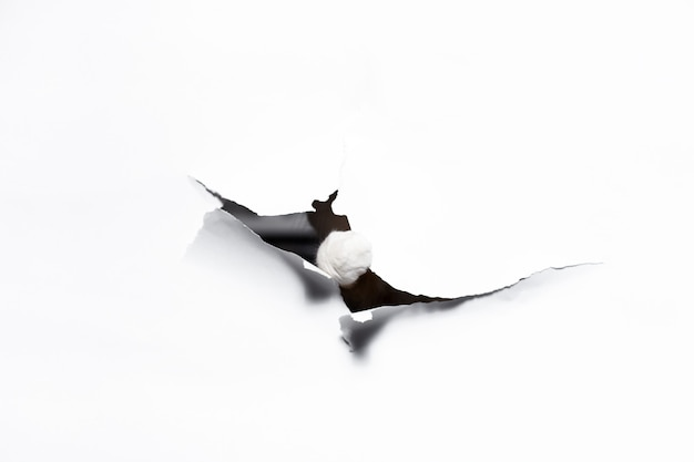 Łapa kota przez otwór z białego papieru