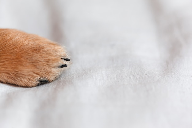 Łapa psa z bliska