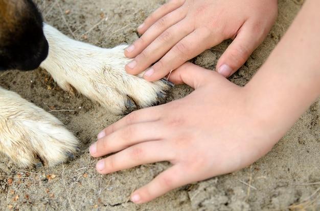 Łapy psa i ręce dziecka w piasku. dotyk miłości i zaufania. miłość dziecięca i zwierzęca