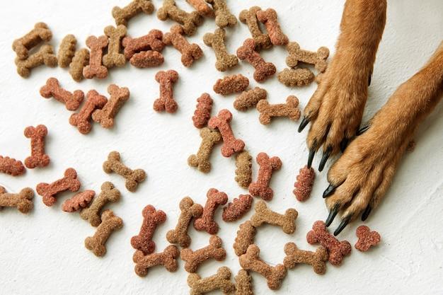 Łapy psów z suchą karmą na białym tle. widok z góry na karmę dla zwierząt domowych, smaczne przekąski w kształcie kości.