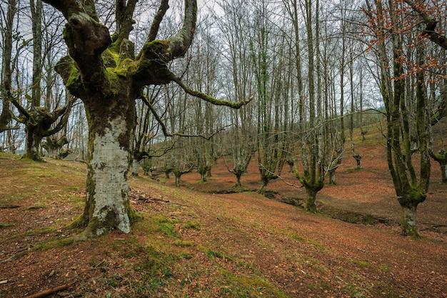Las bukowy otzarreta gorbea natural park hiszpania
