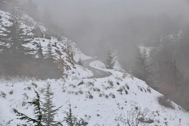 Las cedrowy w górach libanu