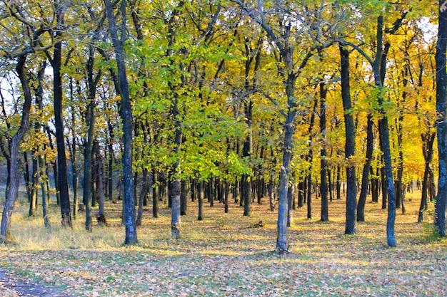 Las dębowy jesienią