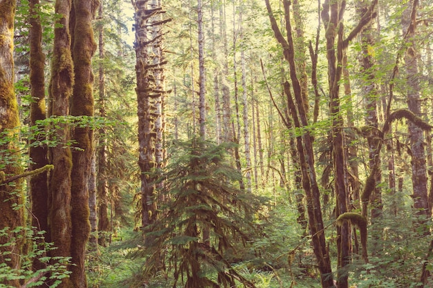 Las deszczowy z gęstą roślinnością
