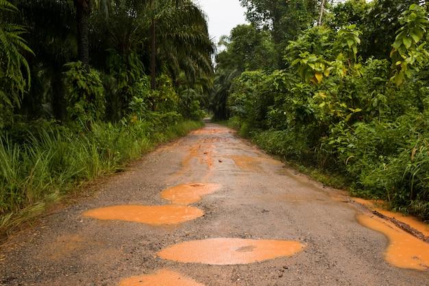 Las deszczowy z polną drogą