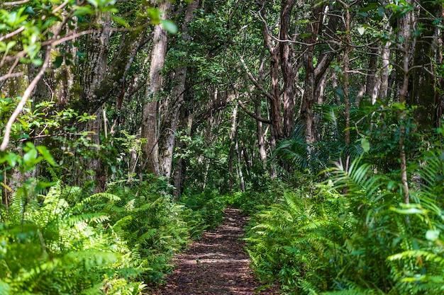 Las dżungli ze ścieżką spacerową i dziką przyrodą w pogodny słoneczny dzień na wyspie zanzibar, tanzania, afryka wschodnia