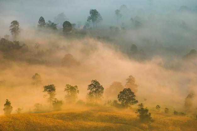 Las górski pokryty piękną mgłą