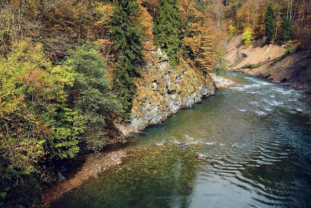 Las góry natura rzeka