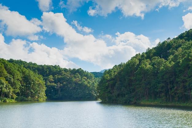 Las i zbiornik wodny