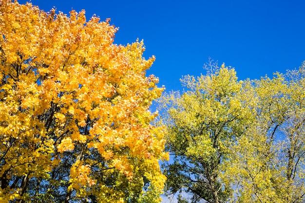 Las jesienią w słońcu z różnymi gatunkami drzew liściastych, oświetlony słońcem w jasne, ciepłe dni