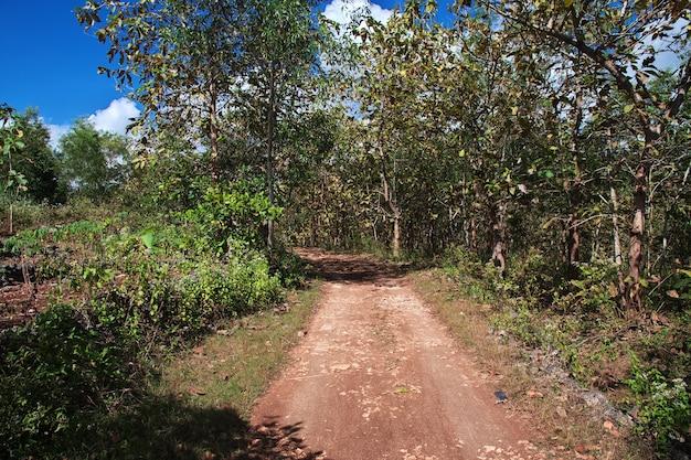 Las kauczukowy w pobliżu miasta yogyakarta, jawa, indonezja