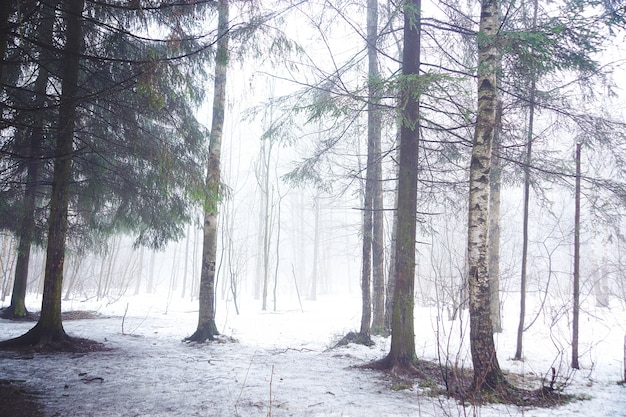 Las liściasty wczesną zimą w silnej mgle.