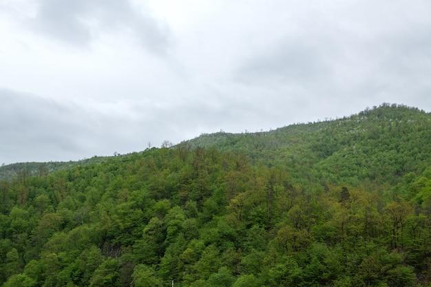 Las na górze i mgła nad nim wieczorem