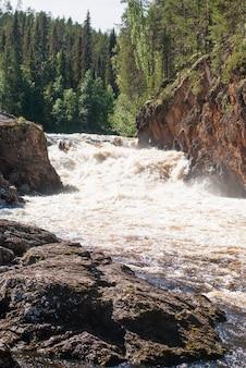 Las na skałach nad wzburzoną rzeką, finlandia. park narodowy oulanka