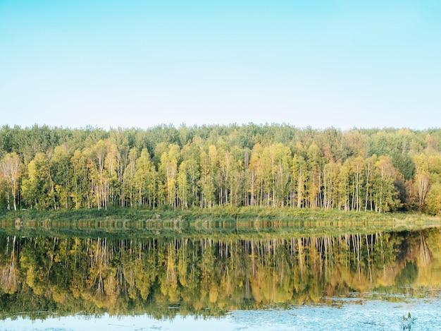 Las nad jeziorem z zielonymi drzewami odbijającymi się w wodzie