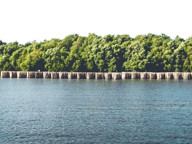 Las namorzynowy, widok z wody. natura uratuj świat koncepcja abstrakcyjny pomysł