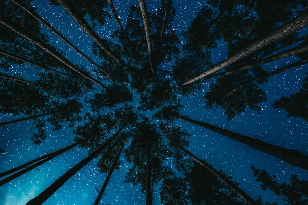 Las nocą z gwiazdami i chmurami.