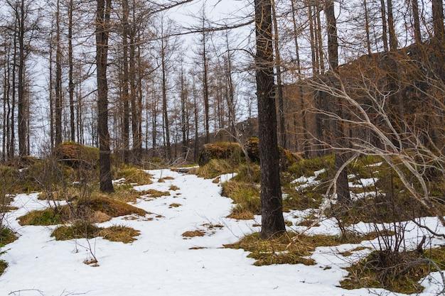 Las otoczony drzewami i trawą pokrytą śniegiem pod zachmurzonym niebem na islandii