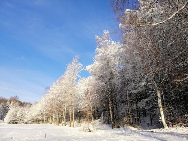 Las otoczony drzewami pokrytymi śniegiem w słońcu i błękitne niebo w norwegii