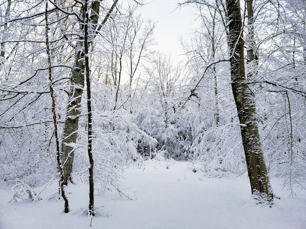 Las otoczony drzewami pokrytymi śniegiem w słońcu w larvik w norwegii