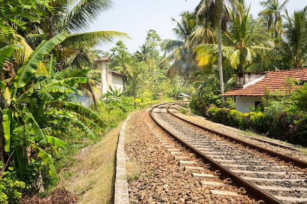 Las palmowy w poprzek drogi kolejowej na sri lance, stara wieś w tle. tropikalny krajobraz cejlonu