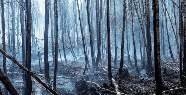 Las po pożarze. spalone pnie drzew w atmosferze. katastrofa ekologiczna.