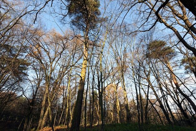 Las pod koniec sezonu