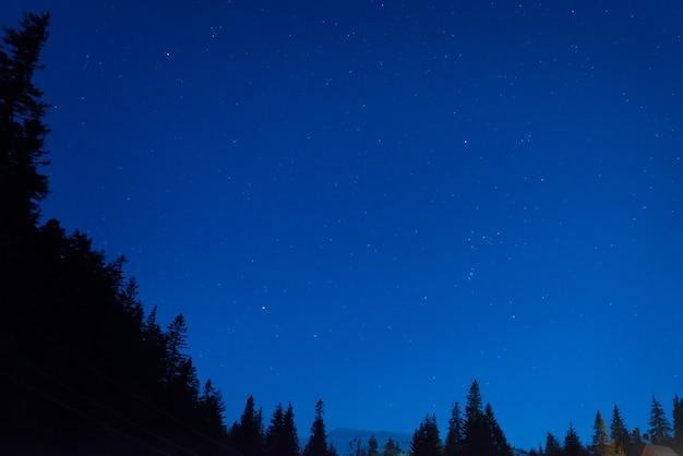 Las pod niebieskim ciemnym nocnym niebem z wieloma gwiazdami