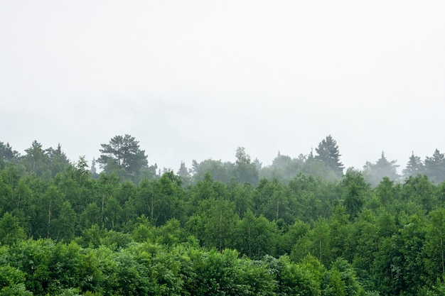 Las podczas mgły i pochmurnej deszczowej pogody.