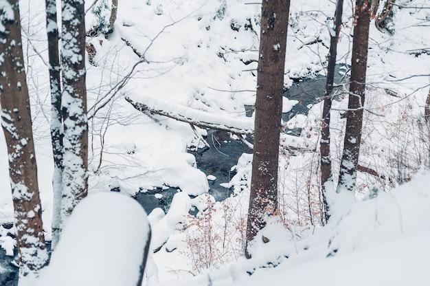 Las pokryty drzewami i śniegiem w ciągu dnia w zimie