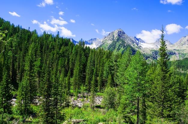 Las świerkowy na łące na zboczu wzgórza w grzbiecie tatr wysokich. wspaniała sceneria górska sceneria wczesną jesienią